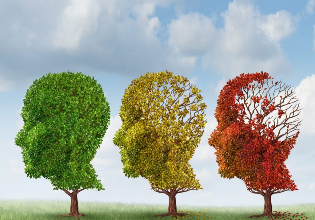 Brain aging and memory loss due to Dementia and Alzheimer's disease with the medical icon of a group of color changing autumn fall trees in the shape of a human head losing leaves as a loss of thoughts and intelligence function.